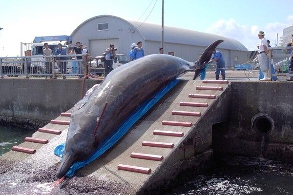Dolphin-kill