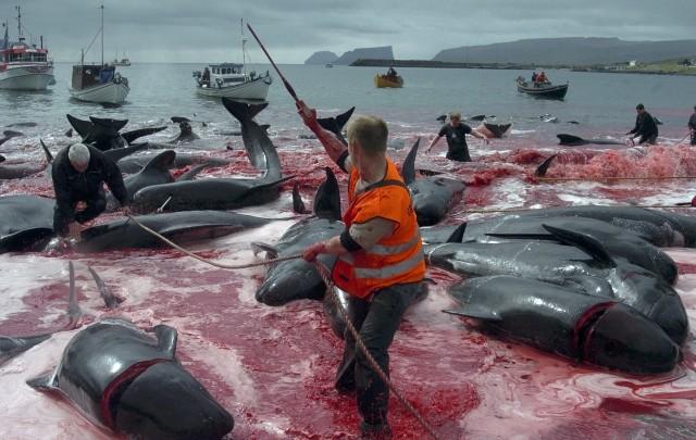 Kill-the-whale